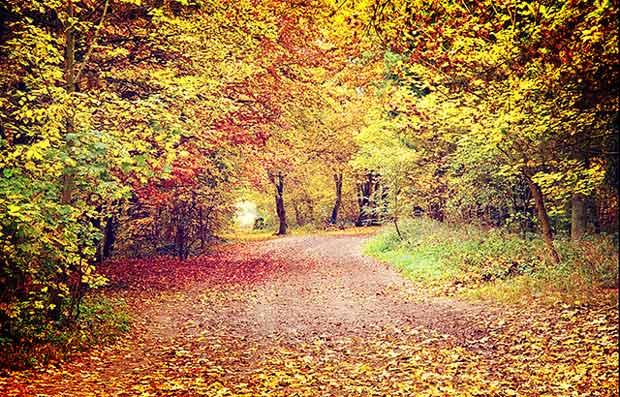 autumn_anr_2014